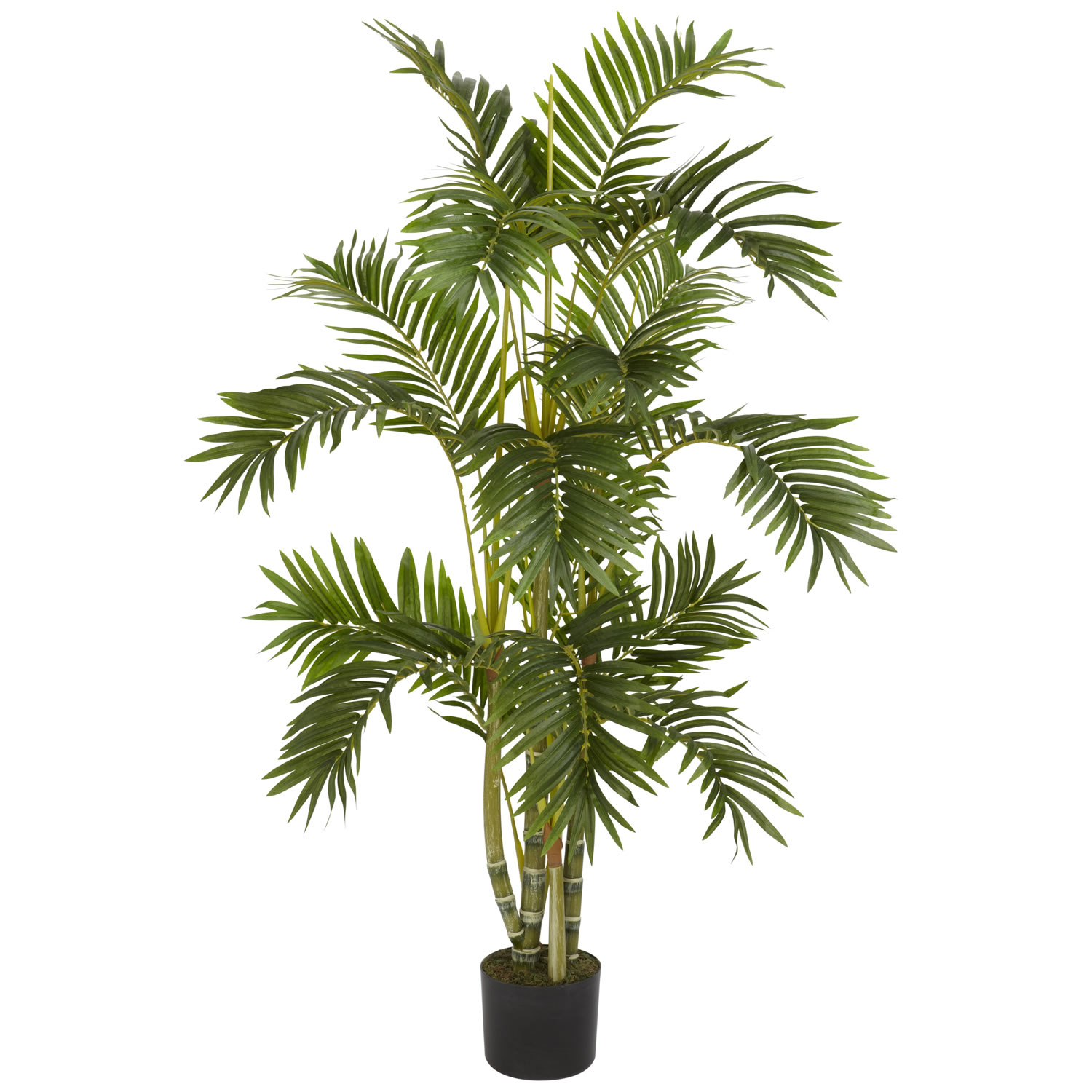 Outdoor potted plant png