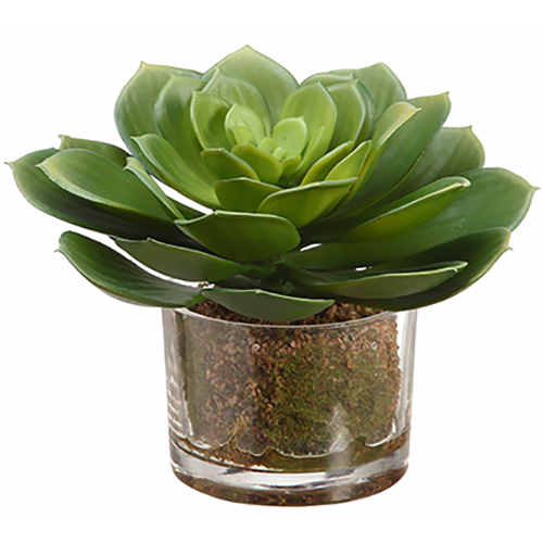 6 5 Echeveria Artificial Plant W Gl Vase Green Pack Of 4
