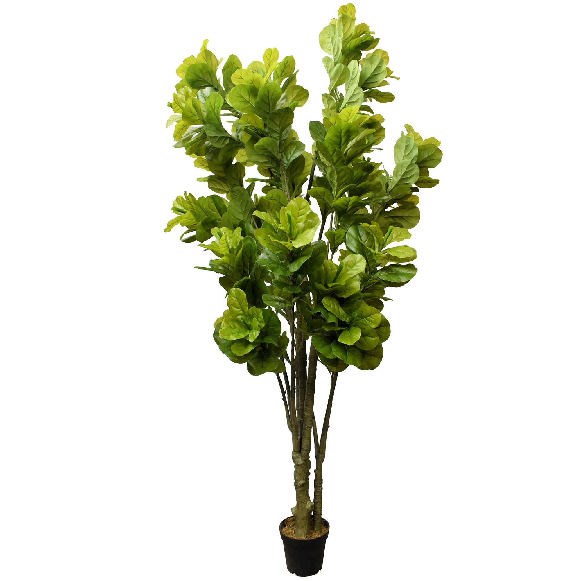 9 5 Quot Real Touch Fiddle Leaf Fig Silk Tree With 3 Trunks