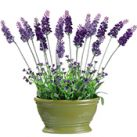Artificial Lavender Flower Arrangements