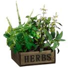 Silk Herb & Garden Plants