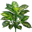 Silk Everyday Greenery Plants