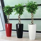 Self Watering Lechuza Planters | Display Planter | SilksAreForever.com