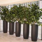 Jay Scotts Fiberglass Planters | Indoor Outdoor Pots | SilksAreForever